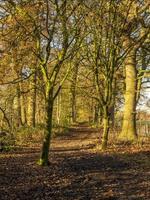 chemin à travers les bois d'automne photo