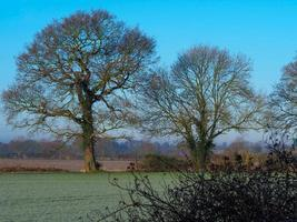 arbres nus dans un champ un matin glacial photo