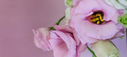 fleurs roses roses et blanches avec fond photo