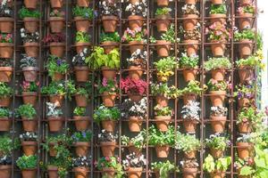 mur de diverses plantes de différentes couleurs en pots