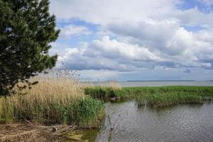 L'herbe et les arbres avec un ciel bleu nuageux dans un estuaire à la broche de Courlande en Russie photo