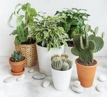 plantes d'intérieur en pot photo