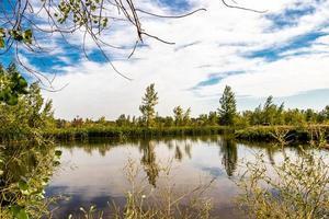 étang paisible avec arbres photo