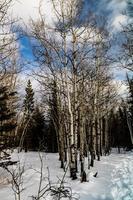 vue sur la forêt d'hiver photo
