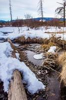 neige dans une forêt photo