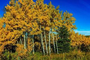 arbres jaunes en automne photo