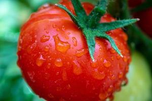 gros plan, de, a, gros, tomate rouge vif photo