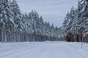 Route d'hiver blanche dans le nord de la Suède photo