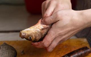 nettoyer le poisson des intestins, couper les carpes crucian avec un couteau. photo