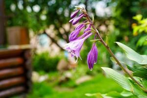 fleurs violettes dans un parterre de fleurs dans un jardin photo