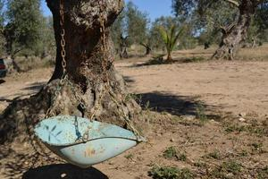 vieille balançoire sur un arbre photo