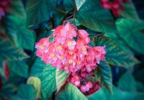 fond floral vintage avec des bégonias de fleurs photo