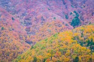 forêt colorée sur la montagne photo