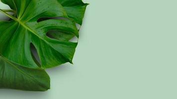 feuilles vertes sur fond vert photo