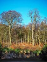 arbres dans un bois par une belle journée d'hiver avec un ciel bleu clair photo