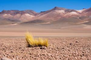 Paysage désertique de la bolivie avec des rochers et un sol rouge photo
