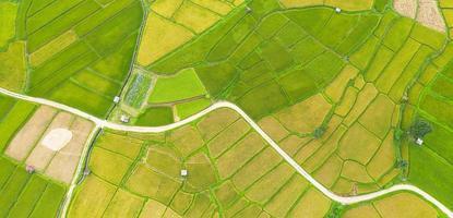 vue aérienne du champ de riz vert et jaune photo