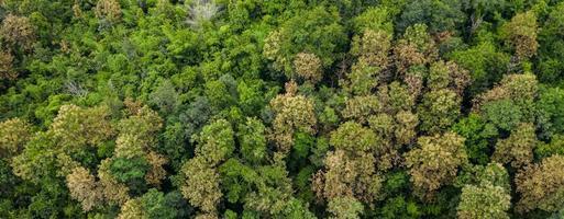 Vue aérienne de dessus de la vue de fond de texture de forêt d'en haut photo