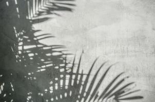 ombre de feuille de palmier sur le mur photo