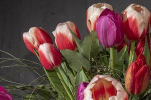 tulipes rouges et blanches sur le terrain photo