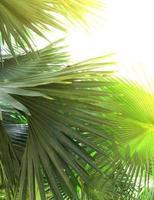 belles feuilles de palmier d'arbre au soleil photo