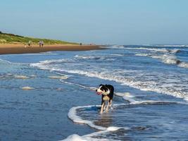 Chien pagayant dans la mer à la plage de Mablethorpe, Lincolnshire, Angleterre photo