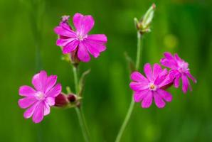 fleurs violettes sur fond vert photo