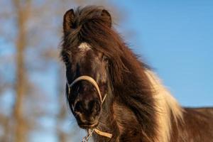 cheval brun et blanc photo