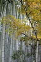 arbre aux feuilles jaunes photo