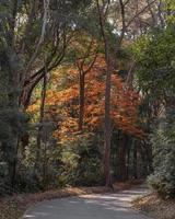 beau feuillage d'automne photo