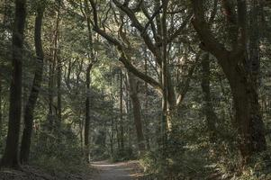 chemin forestier le soir photo