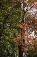 canopée dans la forêt photo