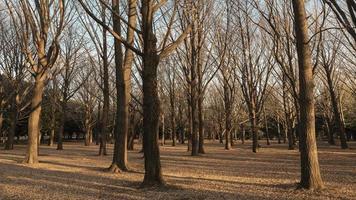 arbres nus en hiver photo