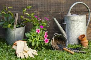 pot de fleurs avec arrosoir photo