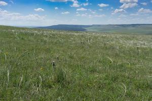 panorama du paysage de steppe avec de l'herbe photo