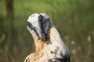 Portrait d'un grand oiseau de proie sur fond naturel photo