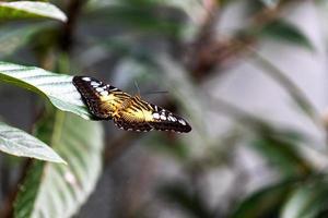 papillon orange sur feuille mushmuly photo