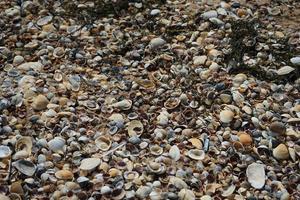 fond avec de petits coquillages de la mer d'azov et des algues sèches photo