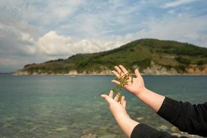 algues vertes entre les mains d'une fille photo