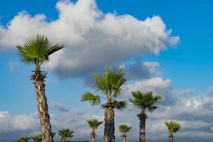 le palmier du tronc avec de grandes feuilles photo
