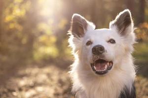 portrait d'un beau chien photo