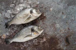 poisson entier sur glace photo