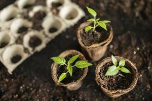 semis de petites plantes photo