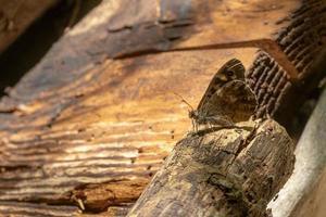 papillon brun sur bois photo