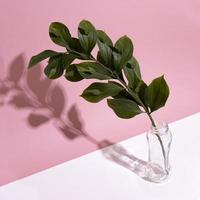 branche de feuille dans un vase sur fond rose photo