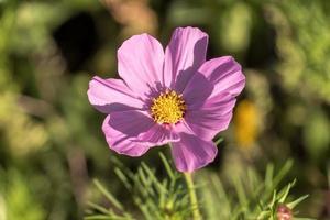 fleurs des champs de saison photo
