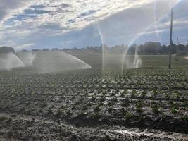 Irrigation par aspersion sur champ labouré photo