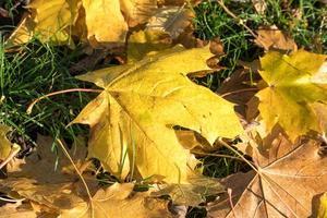 feuilles jaunes automnales photo