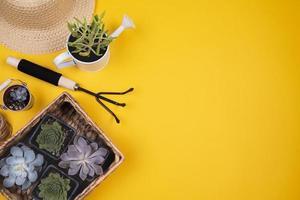 vue de dessus fleurs avec espace de copie. beau concept de photo de haute qualité et résolution