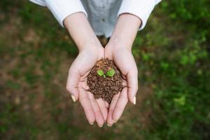 sauver la terre et planter des arbres photo